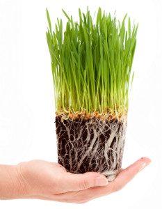 My Cat Grass Box