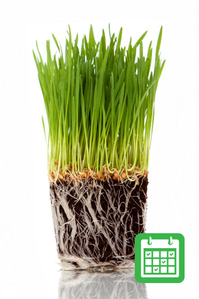 Cat Grass Subscription Every Three Months - How To Get Rid Of Mold On Cat Grass