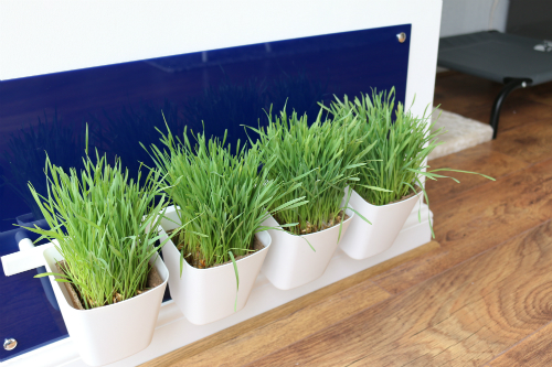 My Cat Grass Station Royal Blue