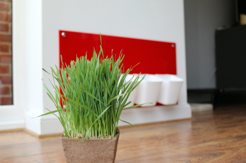 My Cat Grass Station Red