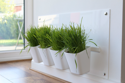 Cat Grass Station