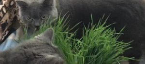 Sharon and Albert Recommend My Cat Grass