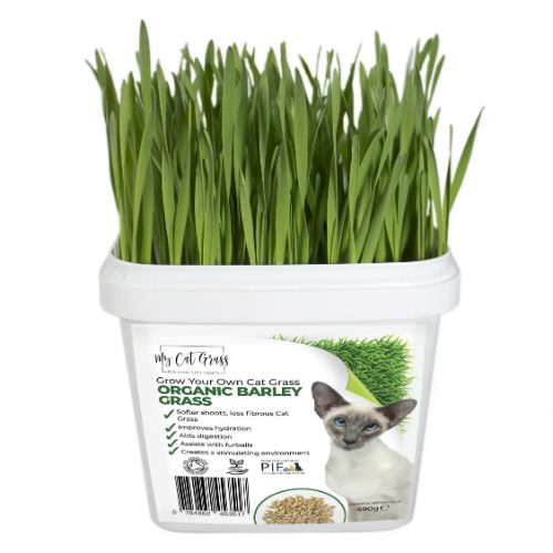 Grow Your Own Cat Grass Kit Barley