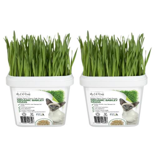 Cat Grass Kit Subscription Barley