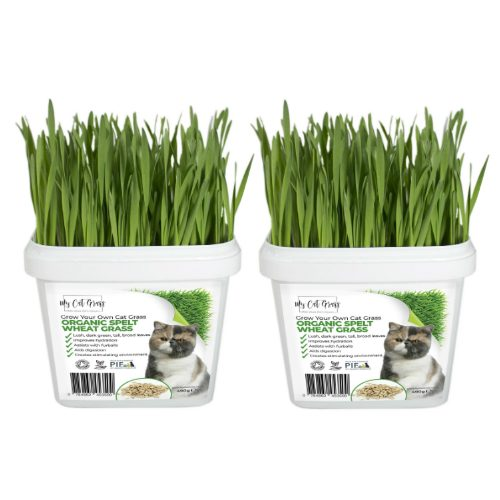 Cat Grass Kit Subscription Wheat