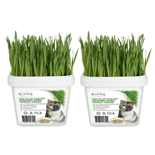 Cat Grass Kit Subscription Wheat