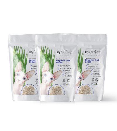 Cat Grass Seeds - Oat