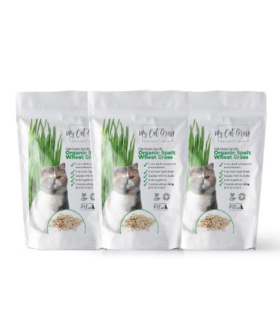 Cat Grass Seeds - Wheat Grass Subscription