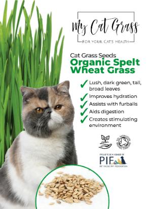 Cat Grass Seeds Wheat Grass
