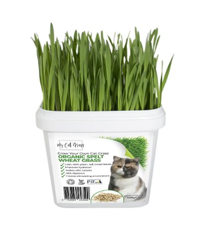 Grow Your Own Cat Grass Wheat