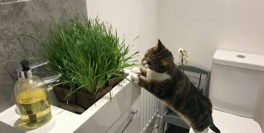 Rupert and Minnie Recommend My Cat Grass