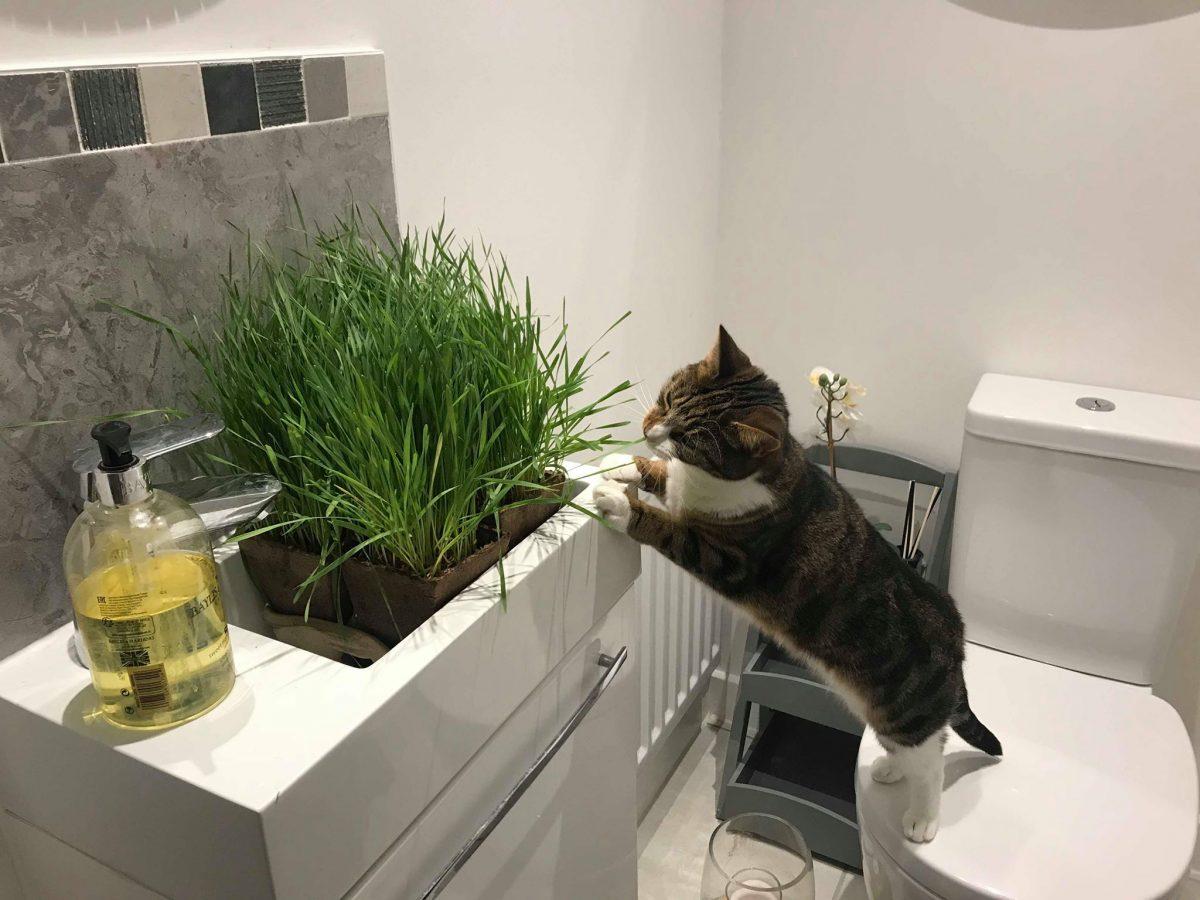 Rupert and Minnie Recommend My Cat Grass
