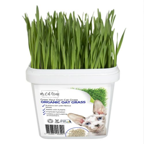 Cat Grass Kit Subscription Oat
