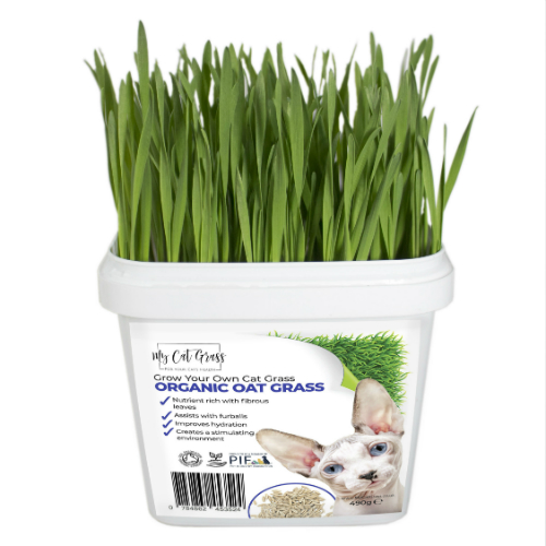 Cat Grass Kit Subscription Oat