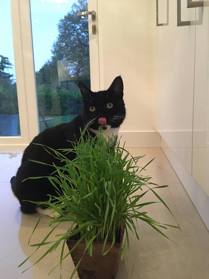 Rhys Dylan and Spencer Recommend My Cat Grass