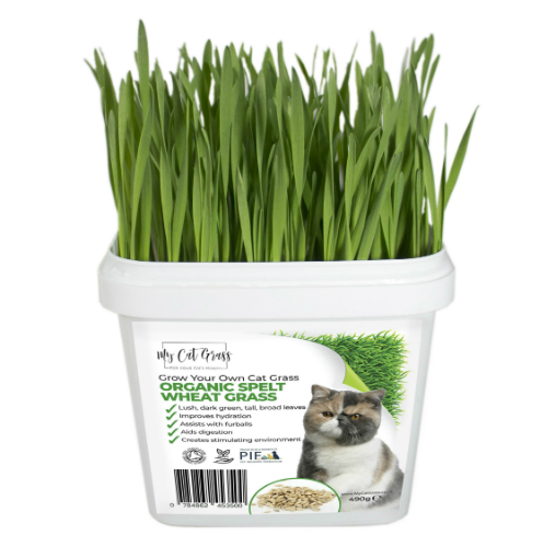 Where to by cat grass - Grow your own cat grass kit