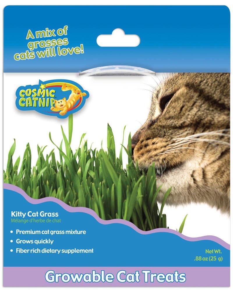 Where to Buy Cat Grass - Kitty Grass Cosmic Catnip