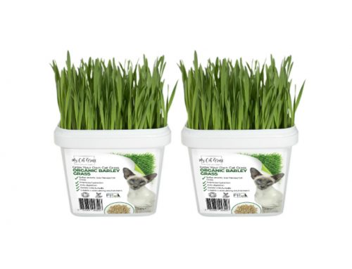 Grow Your Own Cat Grass Instructions – Barley