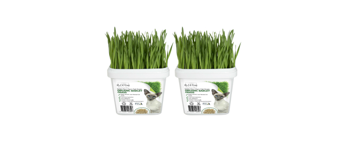 Grow Your Own Cat Grass Instructions - Barley