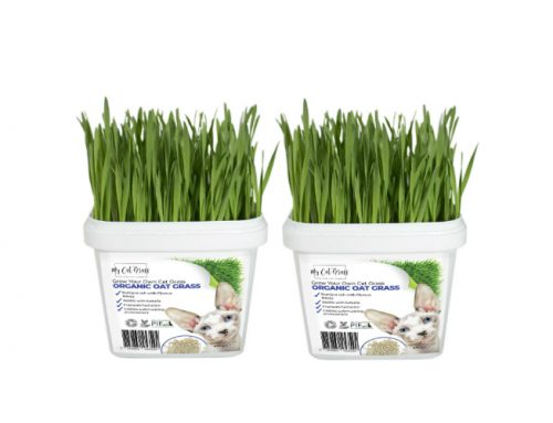 Grow Your Own Cat Grass Instructions Oat 500x383 - How To Get Rid Of Mold On Cat Grass