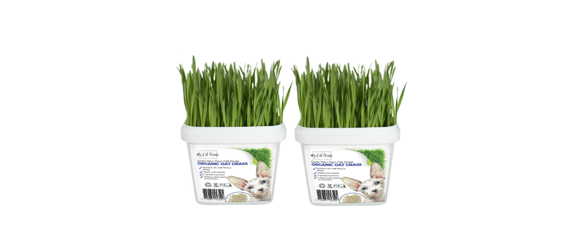 Grow Your Own Cat Grass Instructions - Oat
