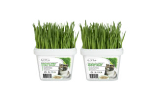 Grow Your Own Cat Grass Instructions - Wheat