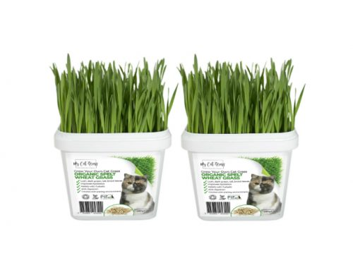 Grow Your Own Cat Grass Instructions – Wheat