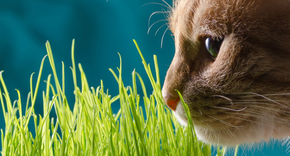 Why Does My Cat Eat Grass?