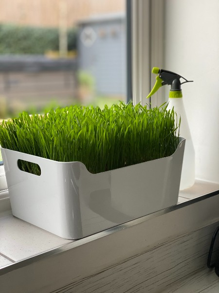 Cat Grass Tray Station Large