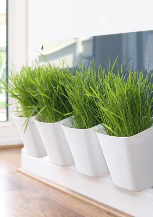 Cat Grass Stations and Trays