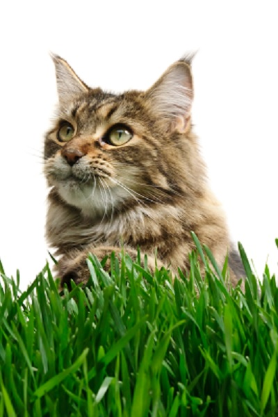 Cat Grass Bed