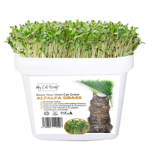 Grow Your Own Cat Grass Kit - Alfalfa